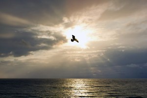 Bird flying over the ocean in front of the sun.